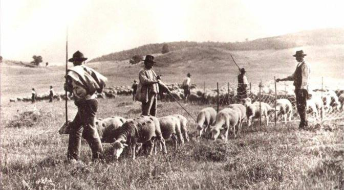 pastori