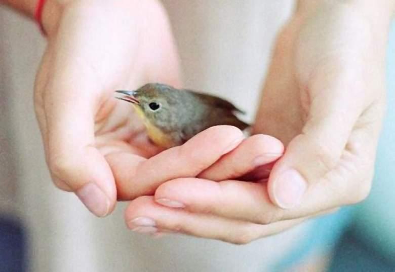 53f12431-uccellino