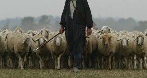 pastore-gregge-pecora